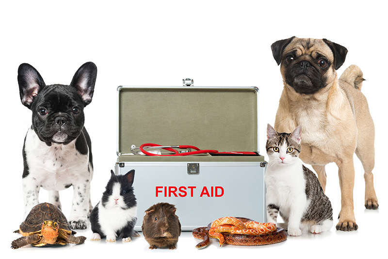 Dogs first aid