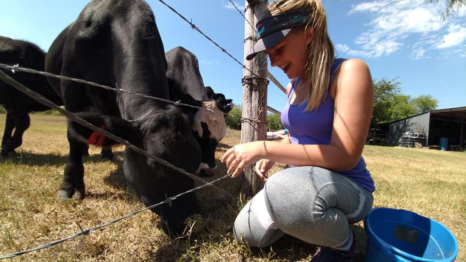 living local feeding cows